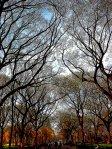 Tree Time by Sahadev @ Central Park,NYC