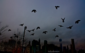 Birds flying over Brooklyn Bridge Park